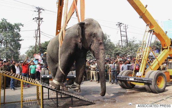 인도의 어느 마을에 나타난 길잃은 야생 코끼리(사진