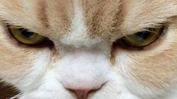 세상에서 가장 많이 화가 난 고양이