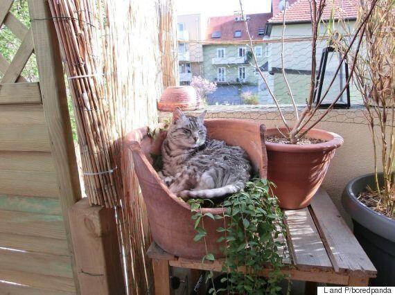 부엌에 들어간 고양이가 갑자기 사라졌다(사진