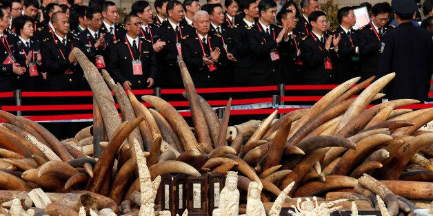 Customs officers attend a ceremony before destroying illegal ivory in Dongguan, southern Guangdong province,...