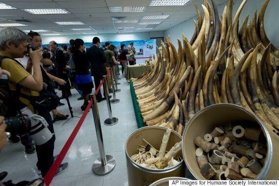 홍콩이 마침내 상아 판매를 단계적으로 금지하기로