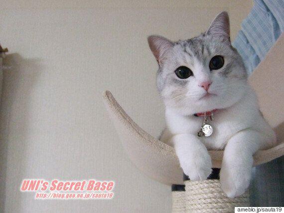 일본의 국민 고양이 '우니'를 추모하는