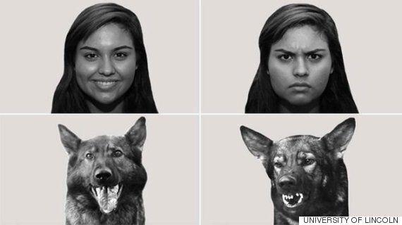 당신의 상상이 아니었다. 개는 정말 당신의 감정을