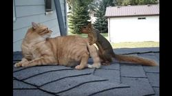 집을 나간 다람쥐가 가끔씩 집에 돌아오는