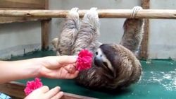 나무늘보에게 꽃송이를