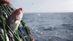 지구 어업은 우리 생각보다 더 심각한