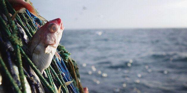 지구 어업 남획은 우리 생각보다 더 심각한