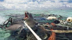 플라스틱 쓰레기, 그 엄청난 해악을 끝낼 수 있는