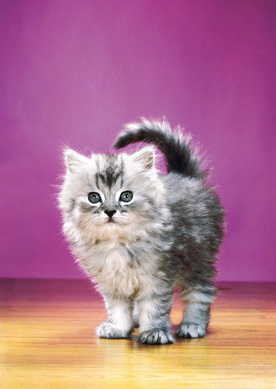 95세의 고양이 사진 선구자 '월터 찬도하'가 찍은 고양이 사진들은 역시 뭔가