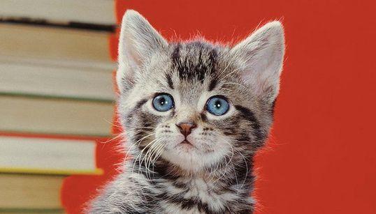 95세의 고양이 사진 선구자가 찍은 고양이 사진들은 역시 뭔가
