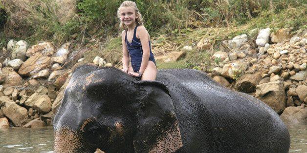 야생동물인 코끼리가 인간을 태우는 '관광 상품'으로 거듭나기 위해 겪는 잔혹한