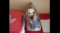 파우치를 좋아하는 고양이의 참신한
