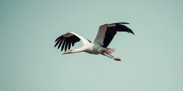 인간 때문에 바뀌는 '철새'들의 이동