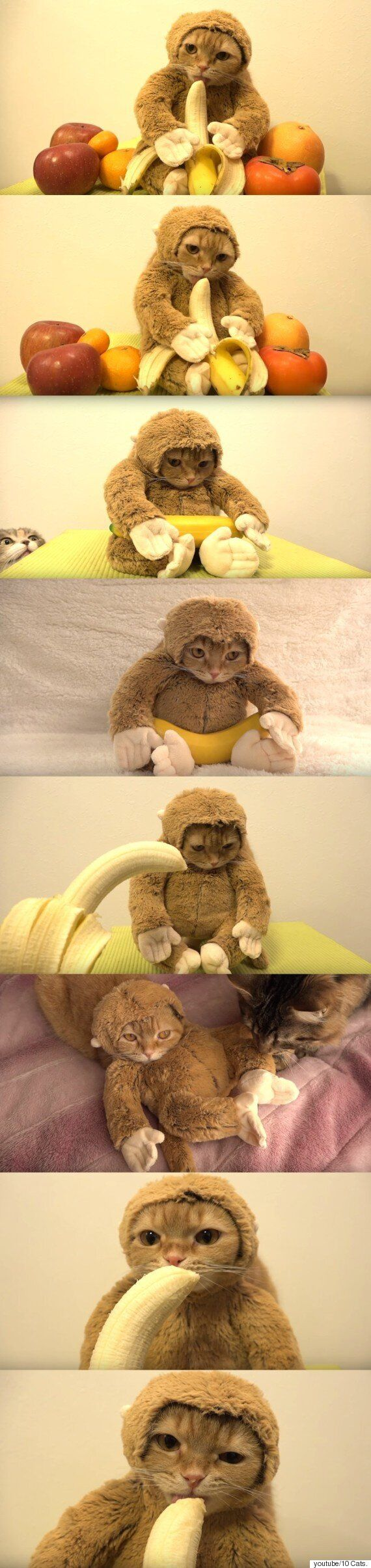 원숭이 인형을 쓰게 된 고양이의