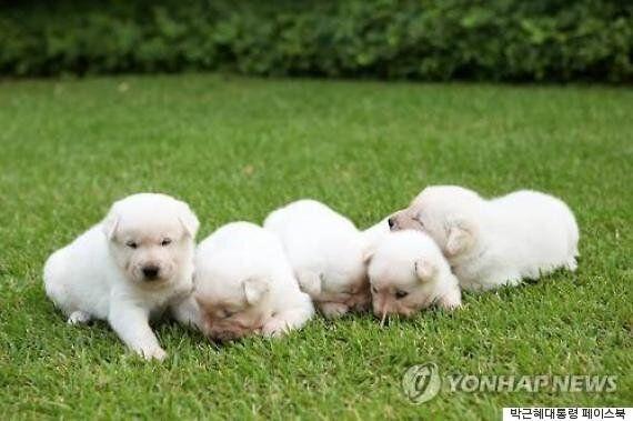 오바마의 '보' vs 차이잉원의 '샹샹', 각국 정상들의 반려동물들