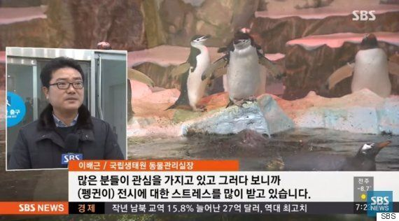 남극 펭귄들이 한국으로 이사 온 이후 새끼를 아예 낳지 못하고
