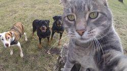 놀라운 '셀카' 실력을 가진 고양이(사진
