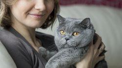 임신부와 고양이는 정말 같이 살 수