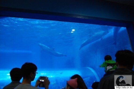 돌고래가 계속 죽어가지만, '고래체험관'에 놀러 가는 관광객들은 연평균 11%씩 증가하고
