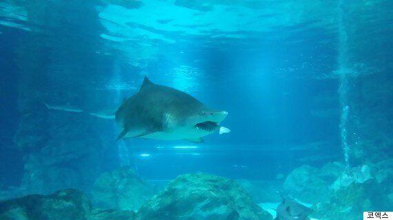 코엑스에서 상어가 상어를 잡아먹다(사진,
