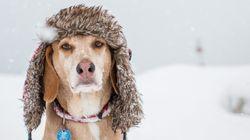 겨울철 반려동물을 따뜻하게 해주는 법
