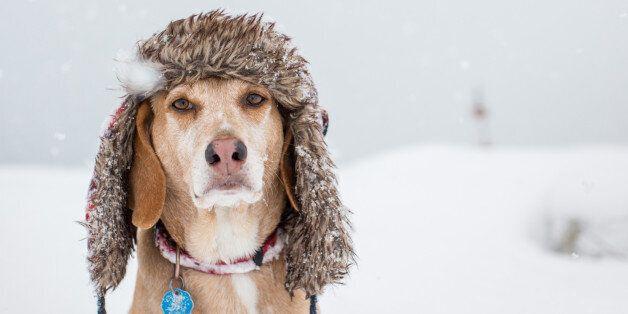 겨울철 반려동물을 안전하고 따뜻하게 해주는 법