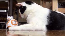 최신 드로이드 BB-8을 만난 고양이들의