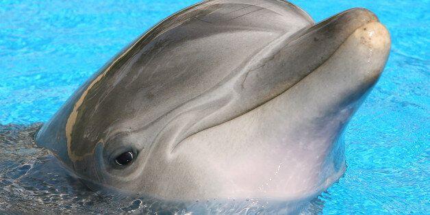 울산 고래체험관, 돌고래 폐사 숨기고 다이지 마을에서 새 돌고래