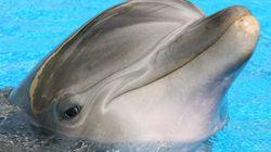 울산 고래체험관, 돌고래 폐사 숨기고 다이지에서 새 돌고래