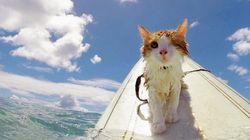 한쪽 눈밖에 없는 이 고양이는 굉장한