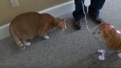 고양이가 고양이 풍선을