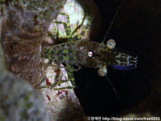 [바다생물이야기] 은둔형 스타