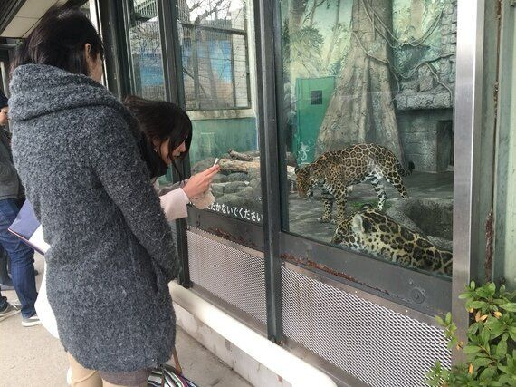 [동물원에 가다] 동물들의 정신병동 일본