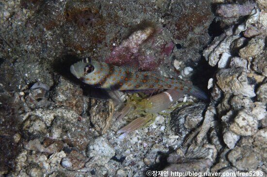 새우, 바다 세계를 지탱하고 있는 작은