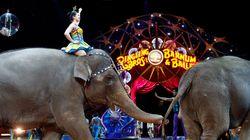 '100년 역사' 미국 코끼리 서커스가 완전히 문을