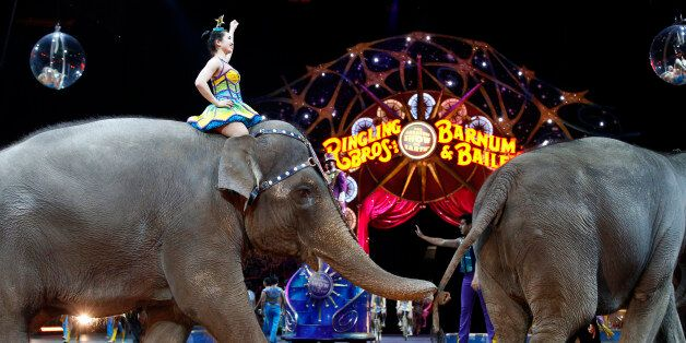 Elephants walk during a performance of the Ringling Bros. and Barnum & Bailey Circus, Thursday, March...