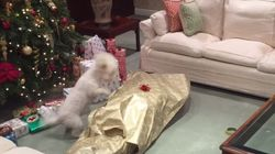 강아지가 주인을 선물로