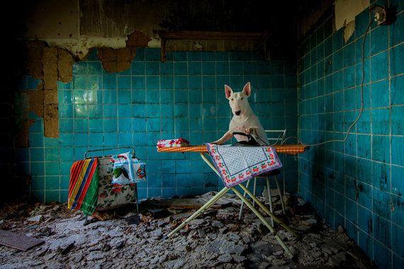 버려진 집을 찾아다니며 개의 화보를 찍었다(사진
