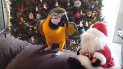 앵무새도 크리스마스가 끔찍하게