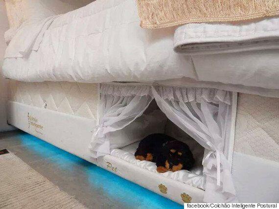 반려동물과 함께 쓰면서도 편하게 잘 수 있는 침대(사진