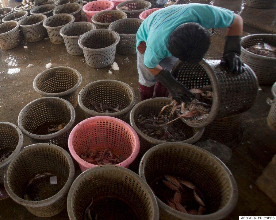 태국에서 잡히는 새우는 현대판 노예제 덕분에 당신의 식탁으로 간다(르포,