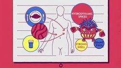 PFC는 암을 유발하거나 면역력을 억제할 수