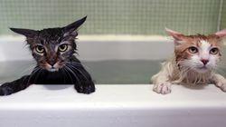 지난 3년 새 고양이 키우는 가구가 63.5%