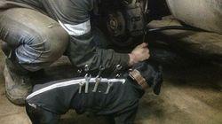 어느 러시아 자동차 정비공의 귀여운 조수(사진