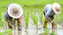 한국 농축산업 이주노동자는 월 308시간을