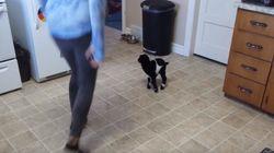 사람에게 뛰는 법을 배우는 피그미