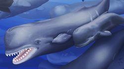 새로 발견된 고래에 '모비 딕'을 딴 이름을