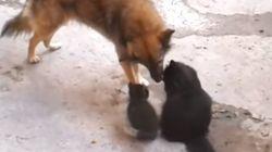 엄마 고양이가 친구 개에게 아깽이를