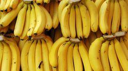 당신이 좋아하는 바나나가 멸종할 지도