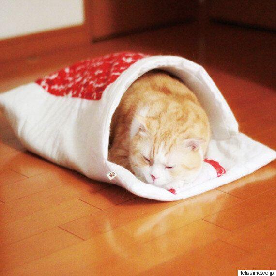 고양이에게 이불을 사주려던 집사의 이상과